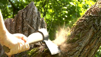 cutting-tree-with-axe